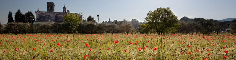 Parrocchia di San Zenone Degli Ezzelini